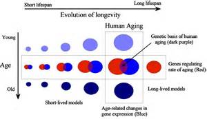 on ageing picture 9