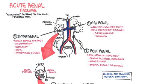 renal failure diet picture 3