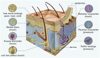 structure of skin modules picture 19