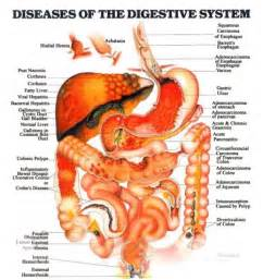 gastrointestinal infection in s picture 15