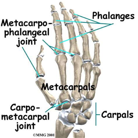 metacarpal phalangeal joint rom measurement picture 3