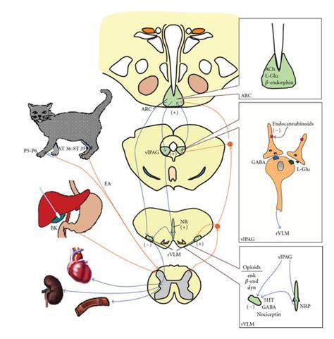 Blood pressure treatment picture 7