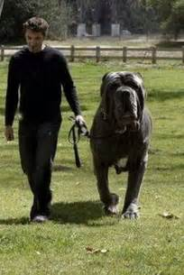 picture of mastiff big penis picture 9