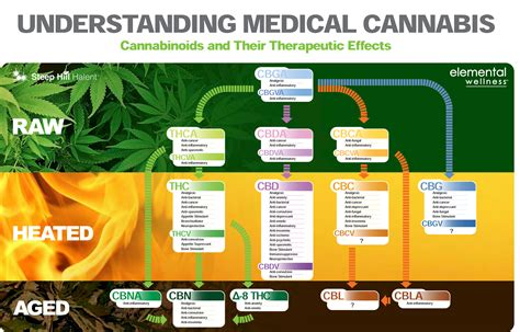 what herbs mimic the chemicals in cannabis picture 12