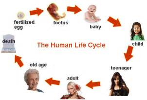 human aging stages pictures picture 13