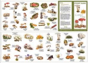 identifying fungi mushrooms wild picture 7