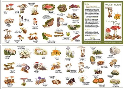 types of fungus picture 7