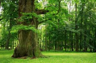where to buy the life tree purify picture 7