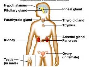 what is a hormone quizlet picture 21