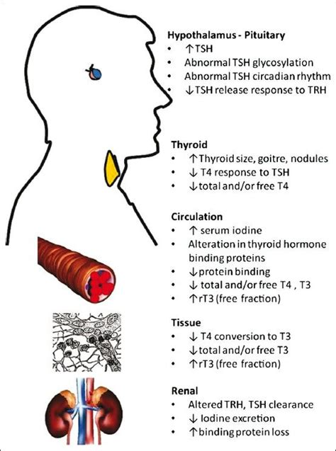 effects of carbonated soda on thyroid function picture 1