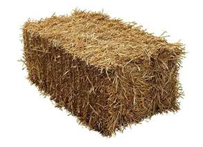 alfalfa hay for sale picture 9