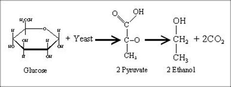 chemical formula for yeast picture 5