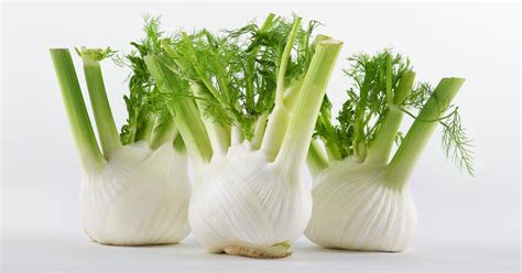 what is fennel picture 11