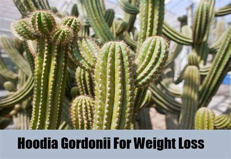 doctors in gulfport that prescribe hoodia picture 15