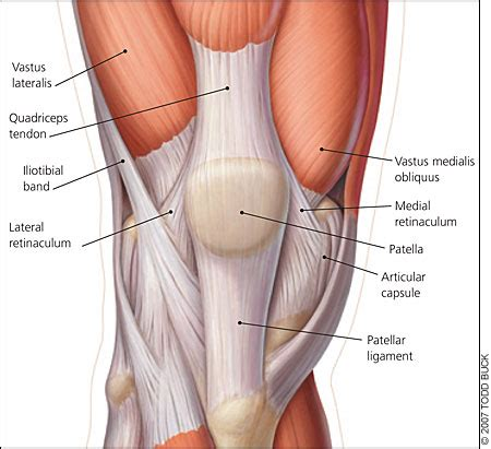joint effusion suprapatellar region and medial joint compartment picture 5