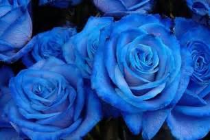 cerpen blue isteriku picture 14
