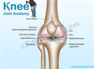 anatomy of knee joint picture 7