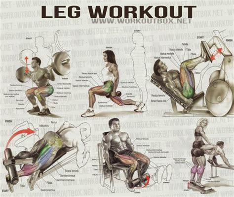 muscle building exercises for legs picture 17