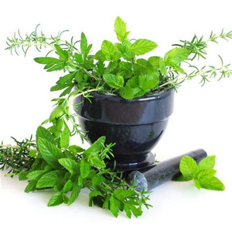 top ten herbs increase prolactin picture 11