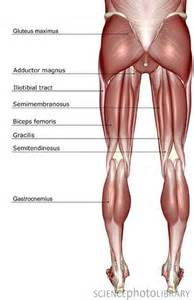 leg muscle pain picture 1