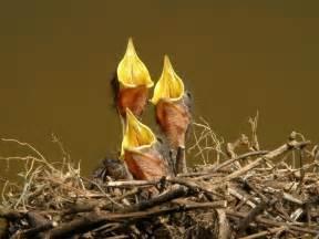 baby bird diet picture 1