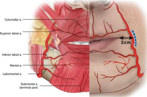 artery in lip picture 2