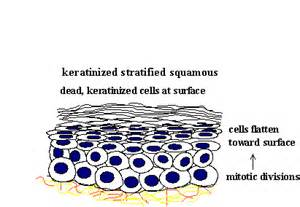 function of keratin picture 18