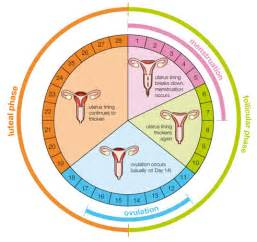 Weight gain during menstrual picture 1