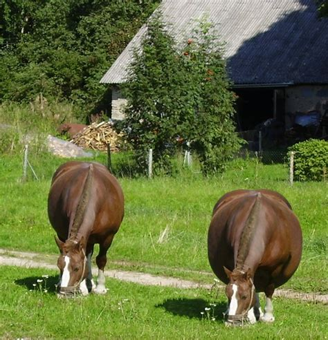 fat and horsing picture 9