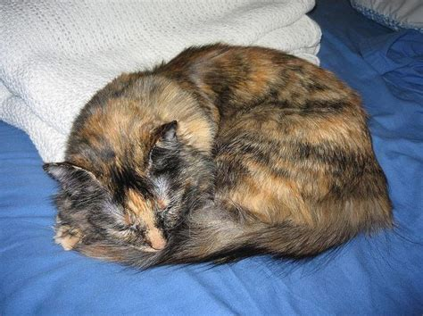 feline yeast picture 14