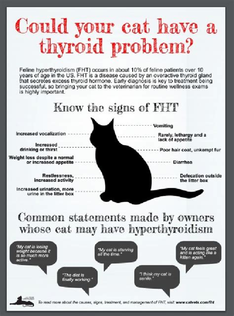 cat thyroid medication picture 7