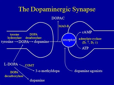 natural dopamine agonist picture 15