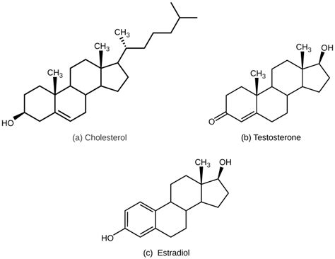 testosterone and estradiol are nucleic acids picture 5