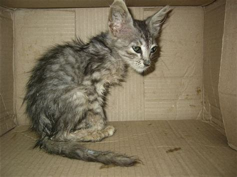 pictures of pet skin rashes picture 5