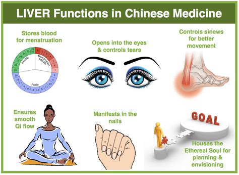 what chinese herbs help fatty liver picture 8