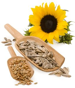Can eating sunflower seeds raise cholesterol picture 9