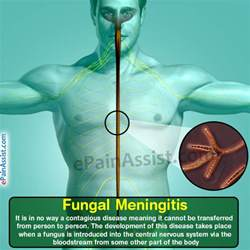 symptom and fungus in blood picture 11