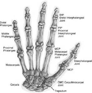 bones and joints picture 13