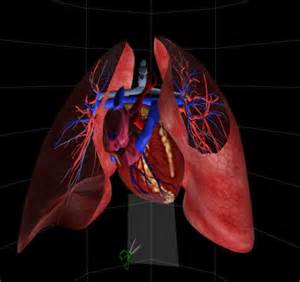animation of blood flow though heart picture 17