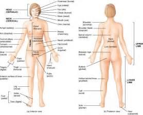 women + anatomy + liver picture 5