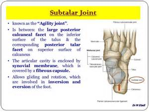 subtalar joint picture 9