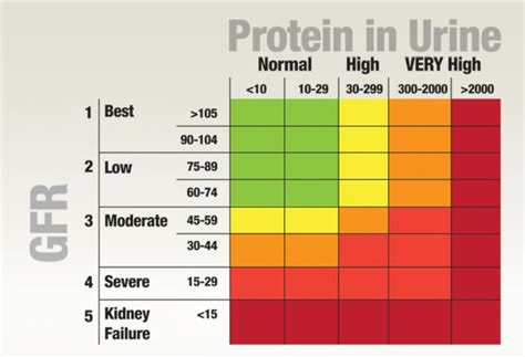 causes for hgh protien levels picture 1