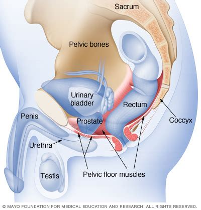 causes of a weak bladder picture 9