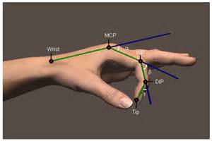 metacarpal phalangeal joint rom measurement picture 13