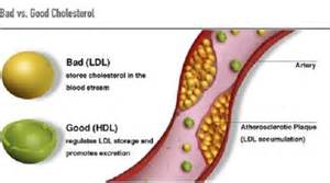 How to raise hdl cholesterol level picture 2