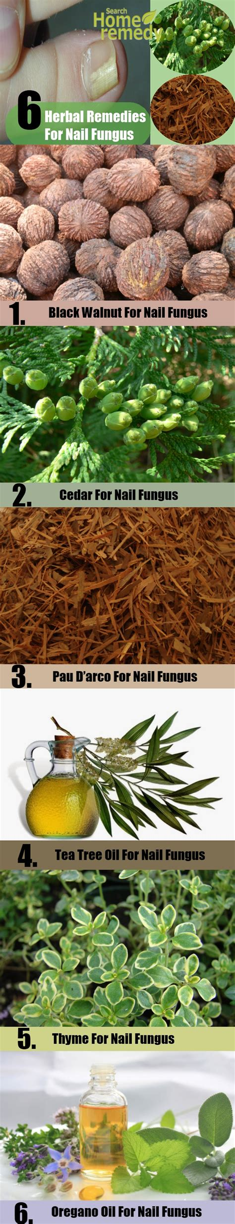 herbal supplement for fungus picture 6