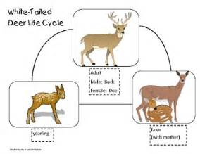 chemically neuter white tail deer picture 2