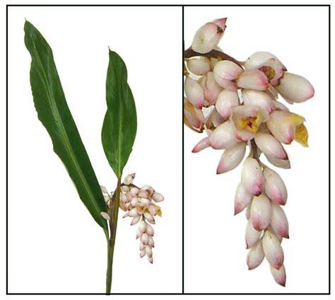 herbal medicine na pamparegla picture 7
