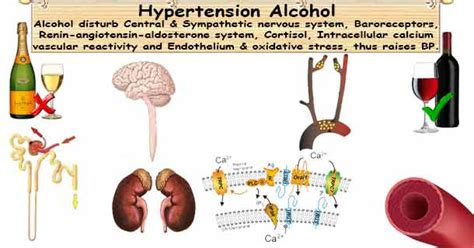 alcohol use with blood pressure meds picture 7