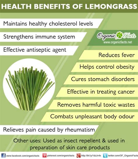 anti fungal diet picture 10